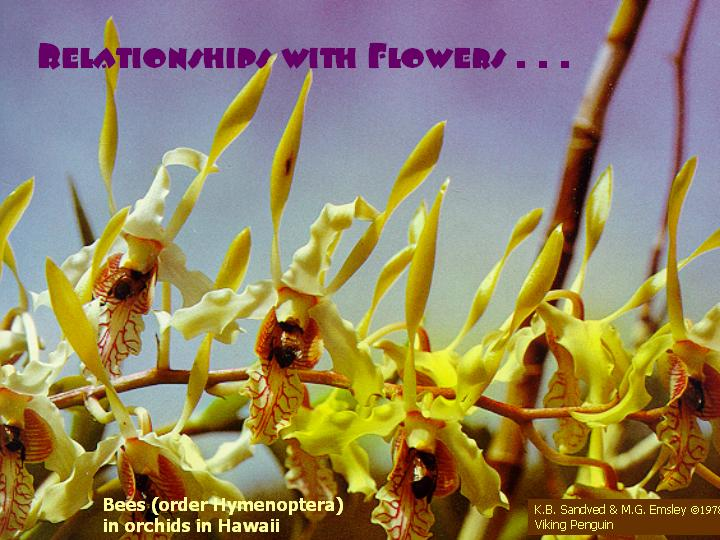 Relationships with flowers . . .