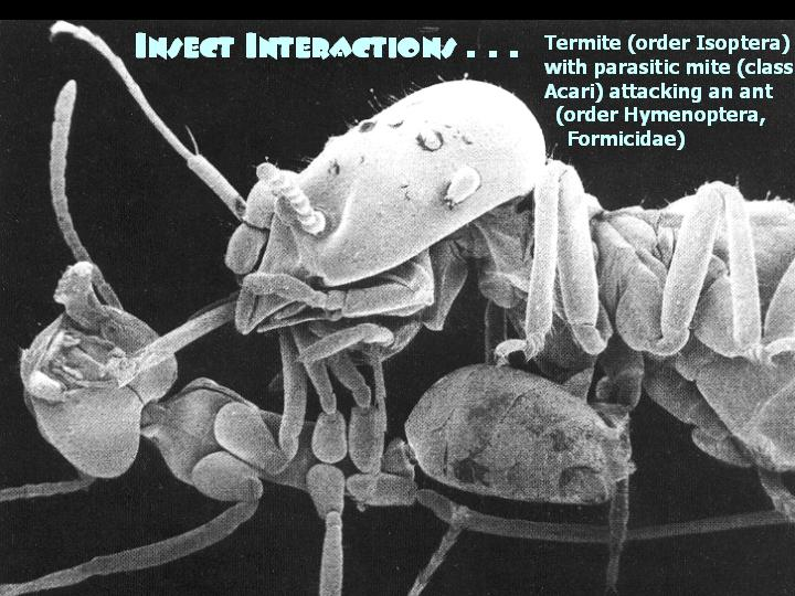 Insect interactions