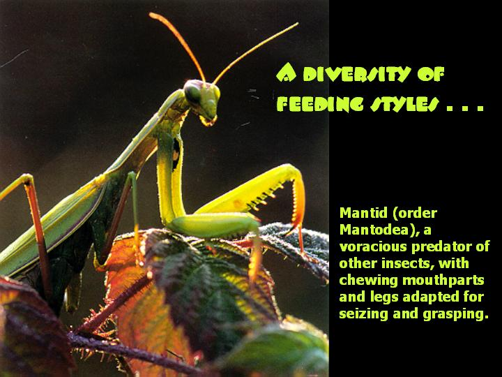 A diversity of feeding styles