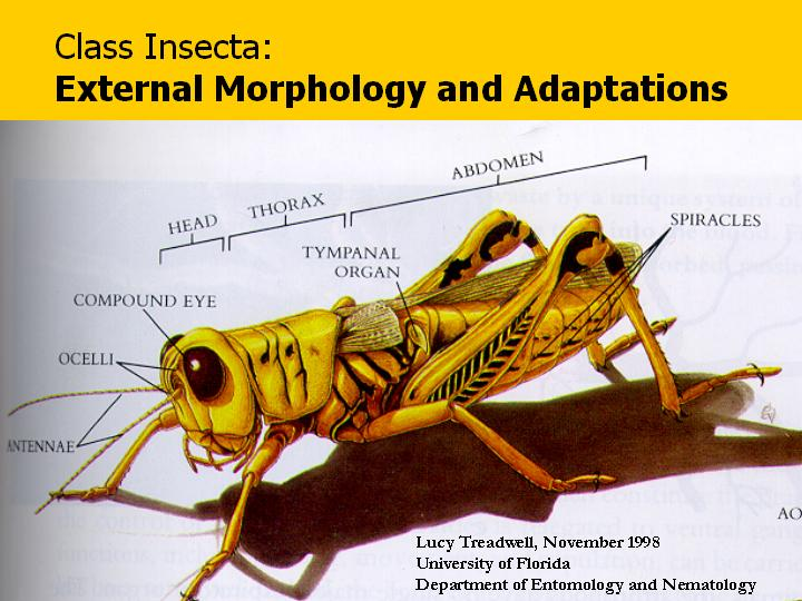 Class Insecta: External Morphology and Adaptations