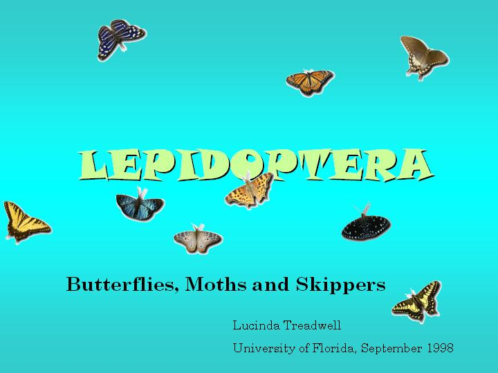 Lepidoptera: Butterflies, Moths, and Skippers