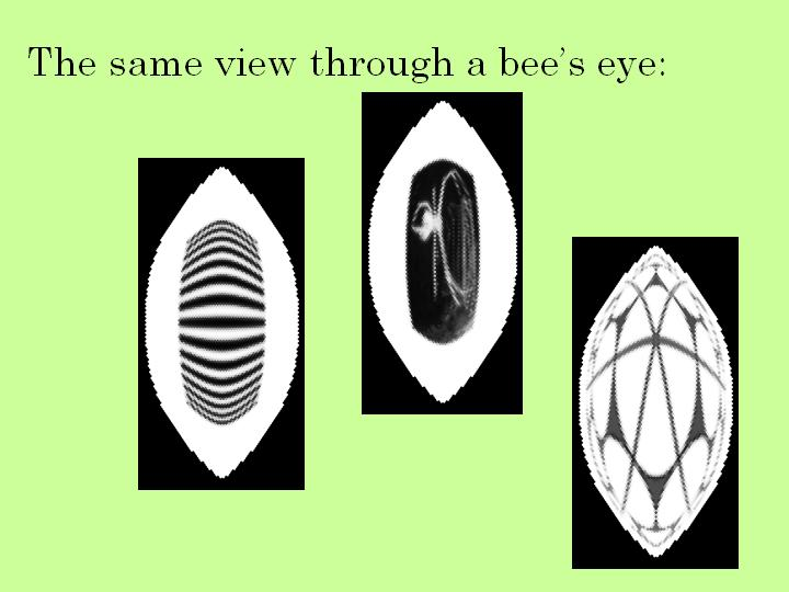 the same view through a bee's eye